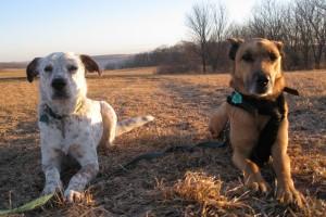 Alert dogs!